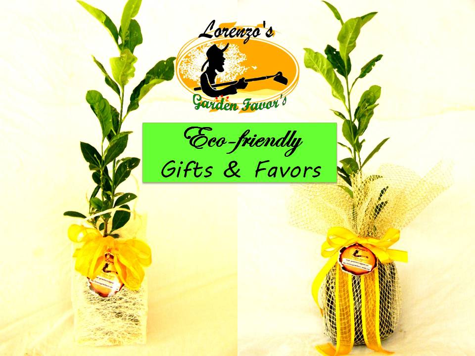 Tree Seedlings Lorenzos Garden Favorsearth Friendly Favor Gifts